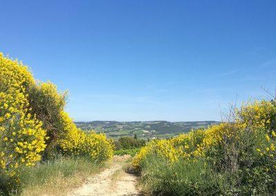 Een pad tussen Mirabel-aux-baronnies en Nyons