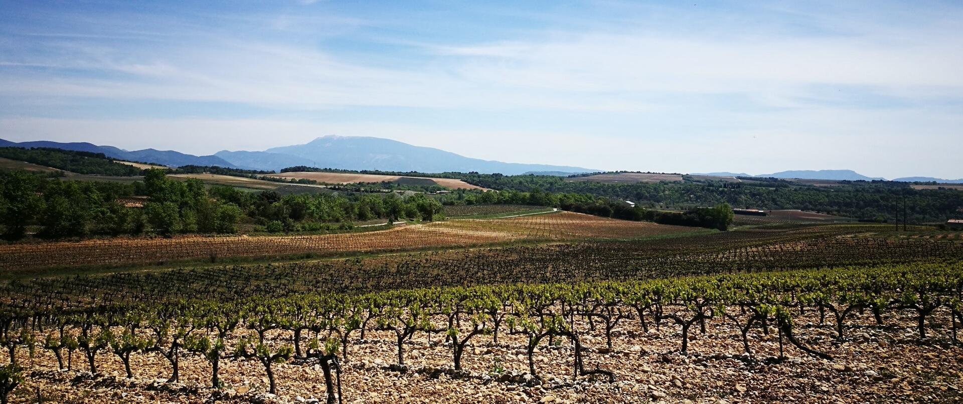 De wijngaarden van Vinsobres met de Mont Ventoux op de achtergrond