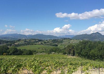Wijnvelden in de buurt van Le rêve provençal