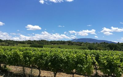 The apricot and vineyards cycle route