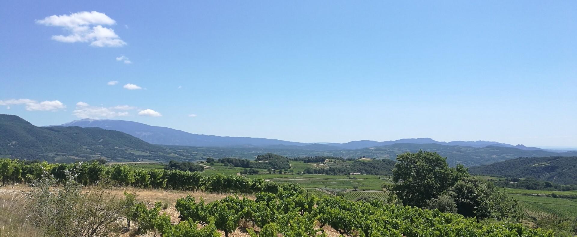 Zicht over wijnvelden richting de Mont Ventoux